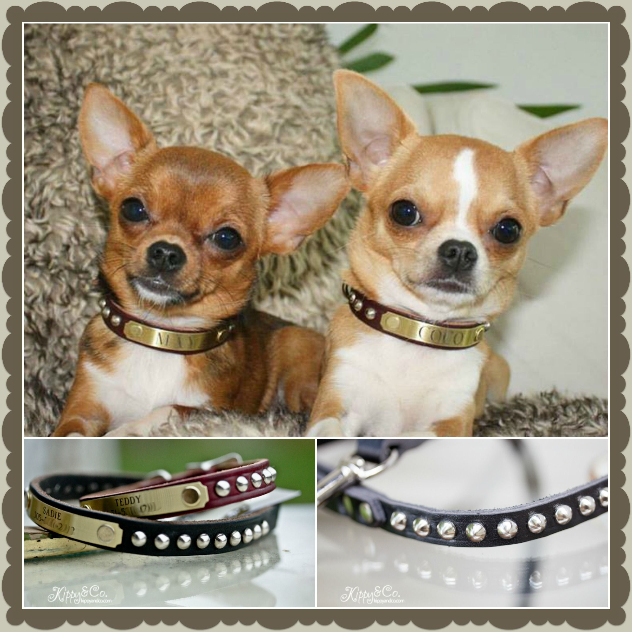 The Chihuahua Twins Coco Maya In Their New Collars Gorgeous