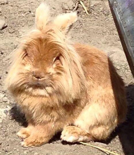 Schattig konijntje