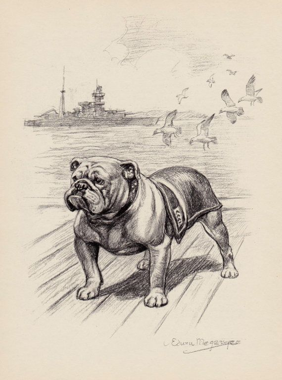 Beautiful BULLDOG Print Vintage Bulldog Art Black and White Gallery ...