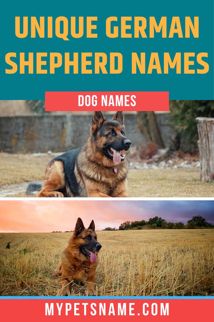 Unique German Shepherd Names In 2020 Female German Shepherd German Shepherd Names Dog Names