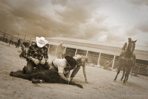 Working Hands, Working Cattle - Colorado Cattle Company, #Colorado. Dude Ranchers' Association Member