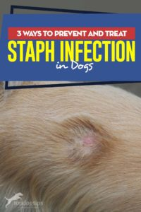 Pictures Of Infected Hair Folicle Dog