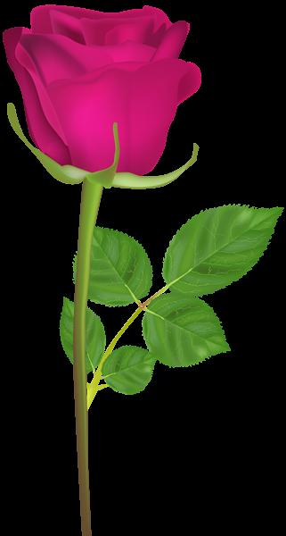 Rose With Stem Pink Png Clip Art Image Rose Flower Png Rose Flower Pictures Love Rose Flower