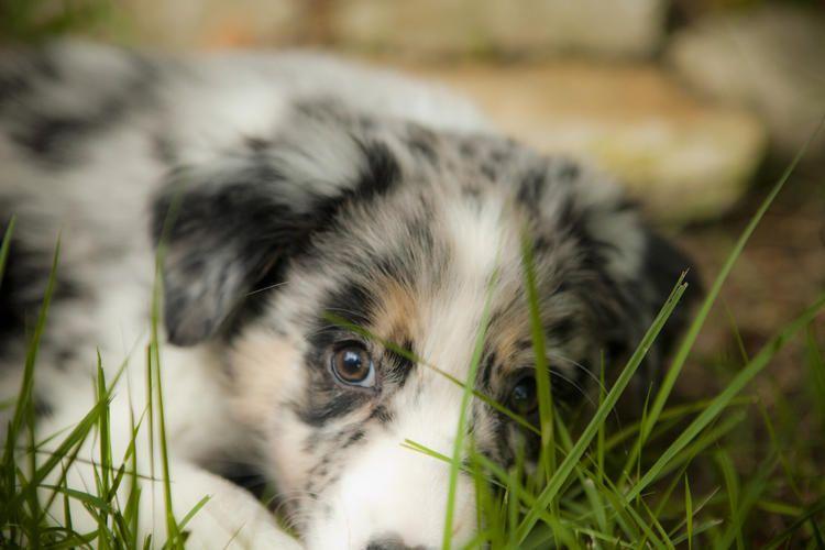 Puppy luv rescue az