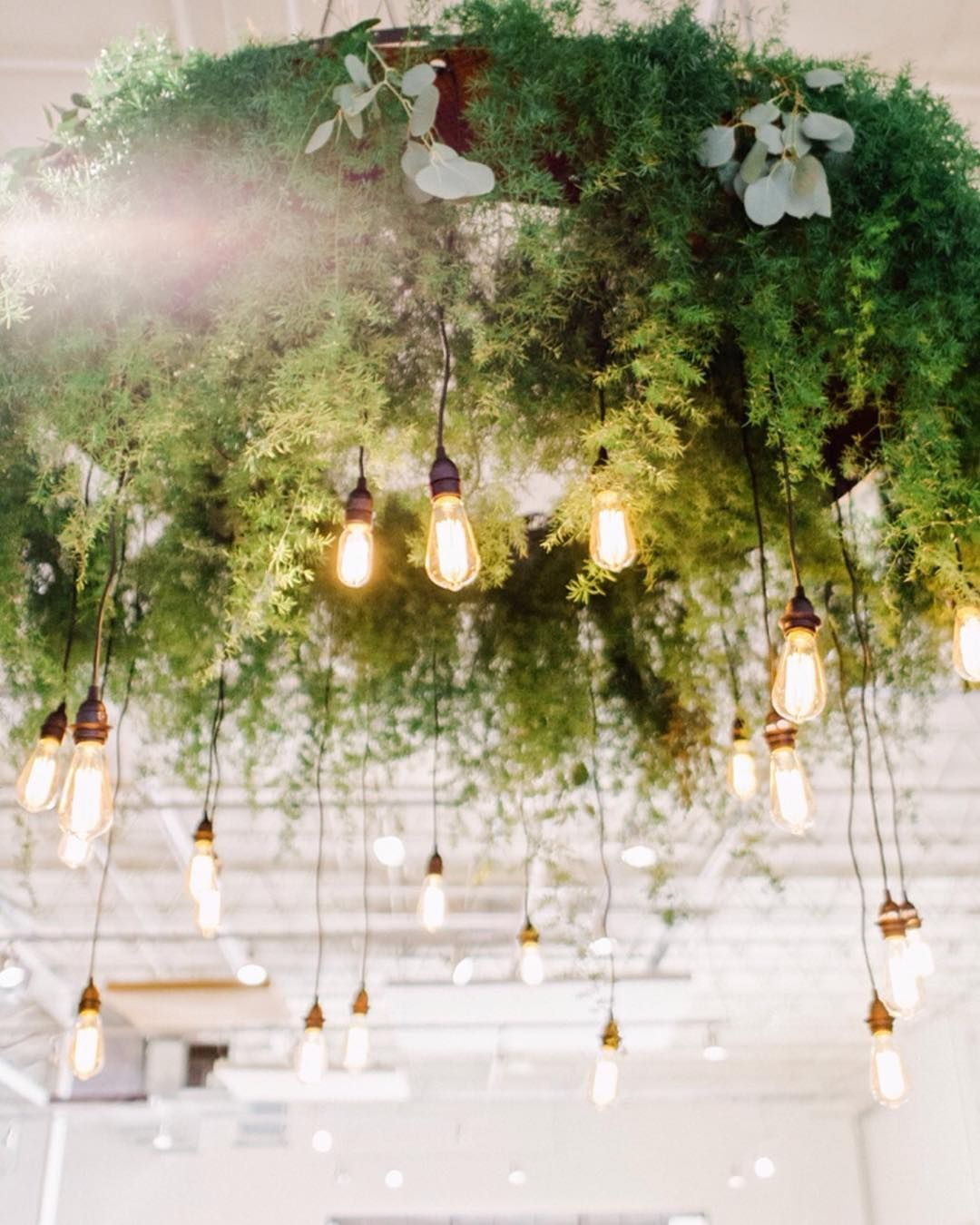 Hanging Greenery And Lights Chandelier Edison Bulb Wedding Wedding Chandelier Wedding Lights