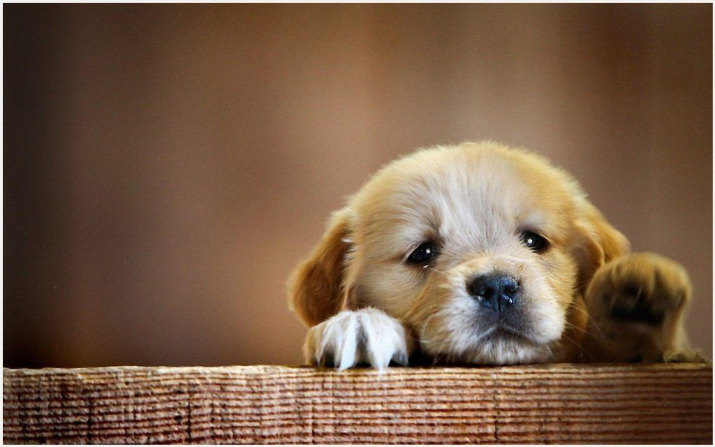 Welcome To Cute Baby Dogs Dog Wallpaper Puppy Wallpaper