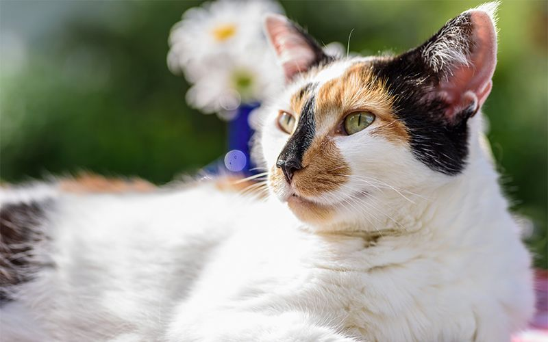 Calico Cat Names 250 Great Ideas For Naming Your Calico Kitten