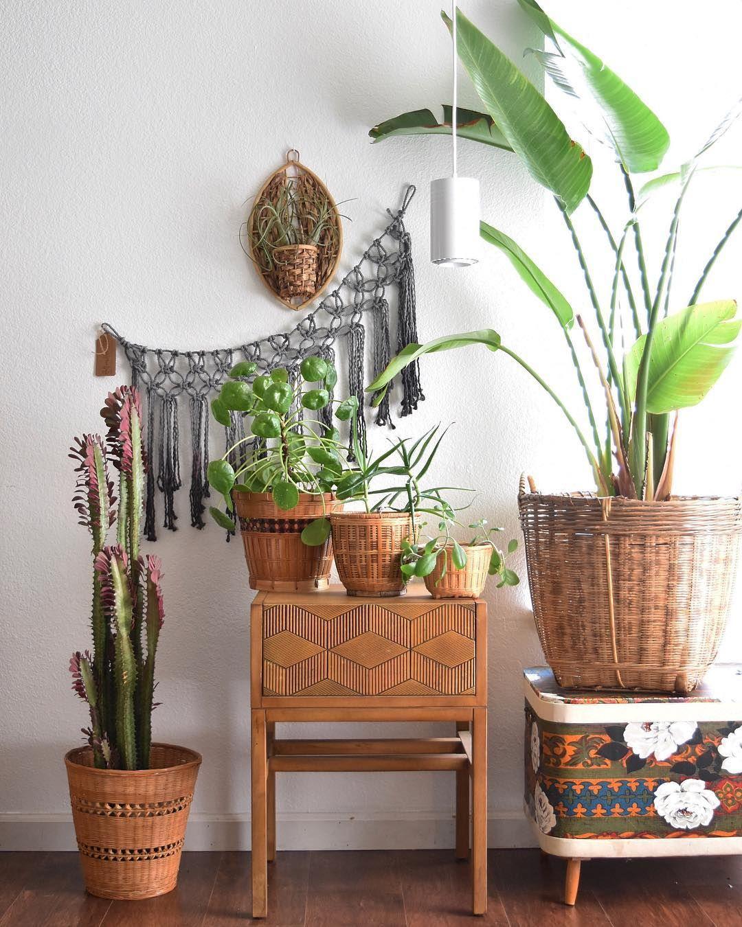 Pilea Peperomioides Houseplants Indoor Plants Plants Decor Home Decor Interior Style Plant Corner Nordic Style Scandin Plant Decor Big Indoor Plants Big Plants #plants #for #living #room #corner