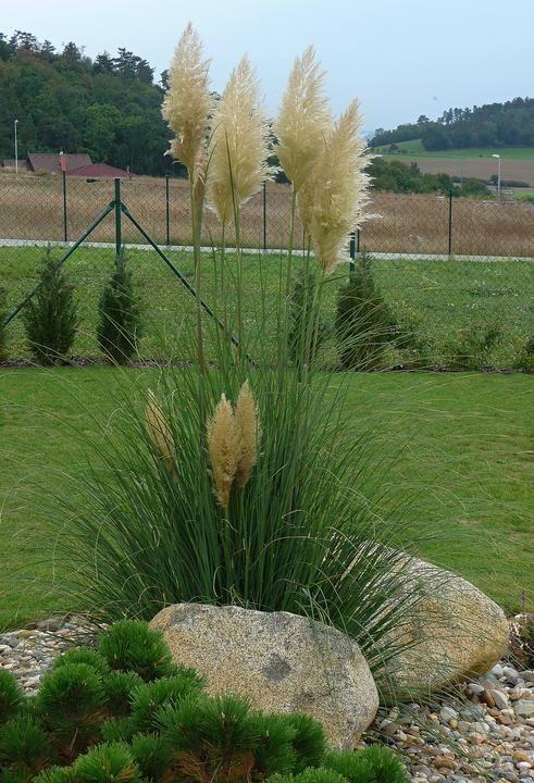 Vloni Mela Trava Jeden Gartengestaltung Ideen Garten Und Garten