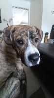 Leo-HOMEWARD BOUND RESCUE York, ON M6N 4c1 info@homewardboundrescue.ca