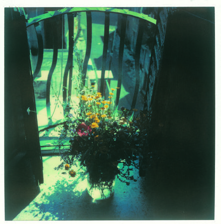 foxes in breeches • Polaroids by Andrei Tarkovsky from Bright, bright...