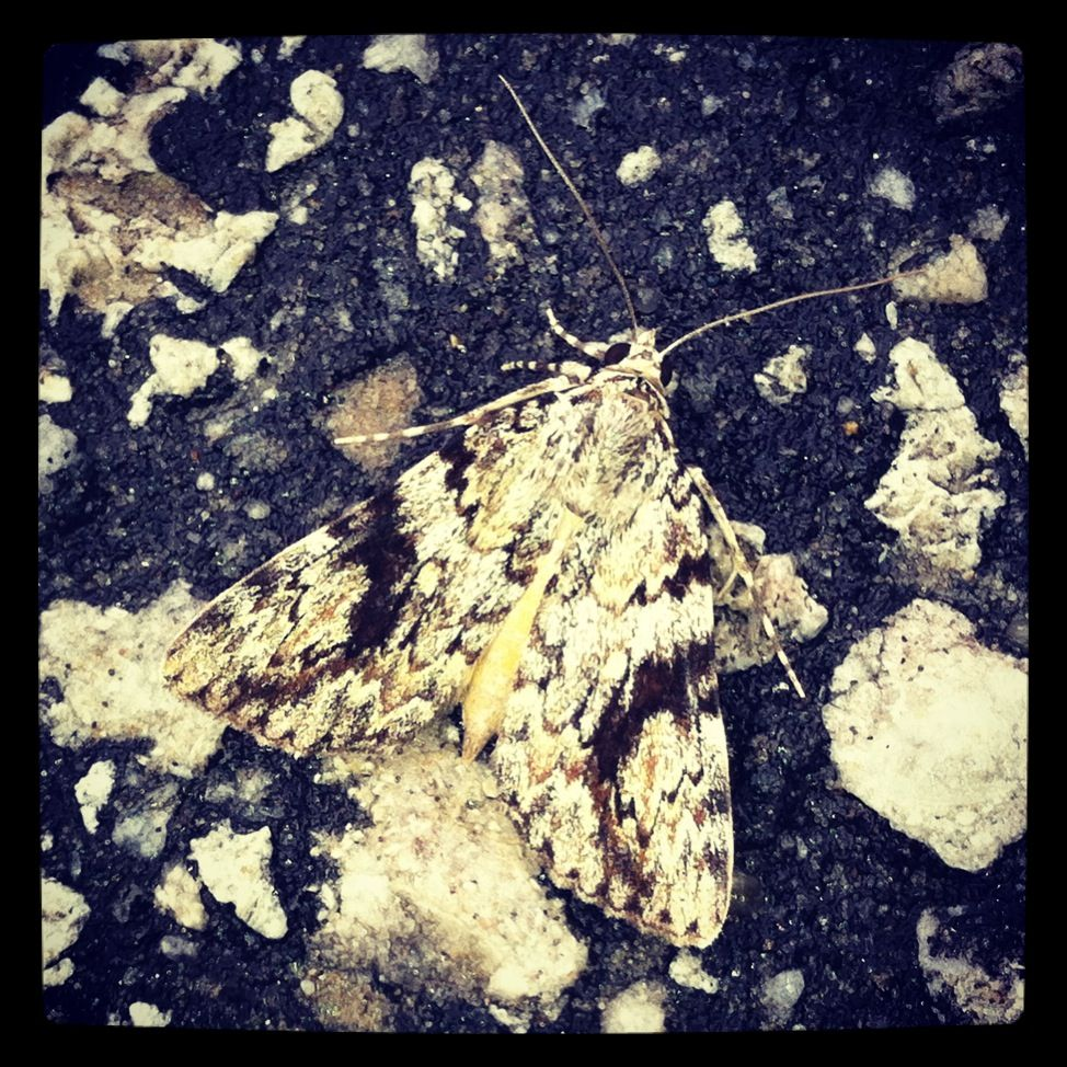 Blending in moth animals insects