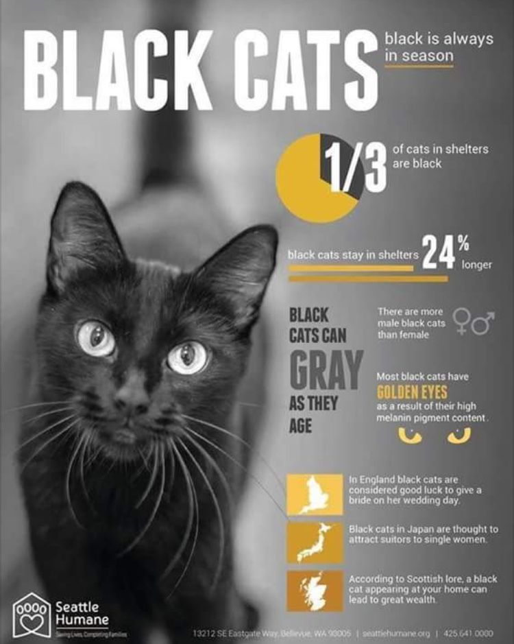 Pin By Tatiana Shine On Wicca Black Cat Appreciation Day Black Cat Cats