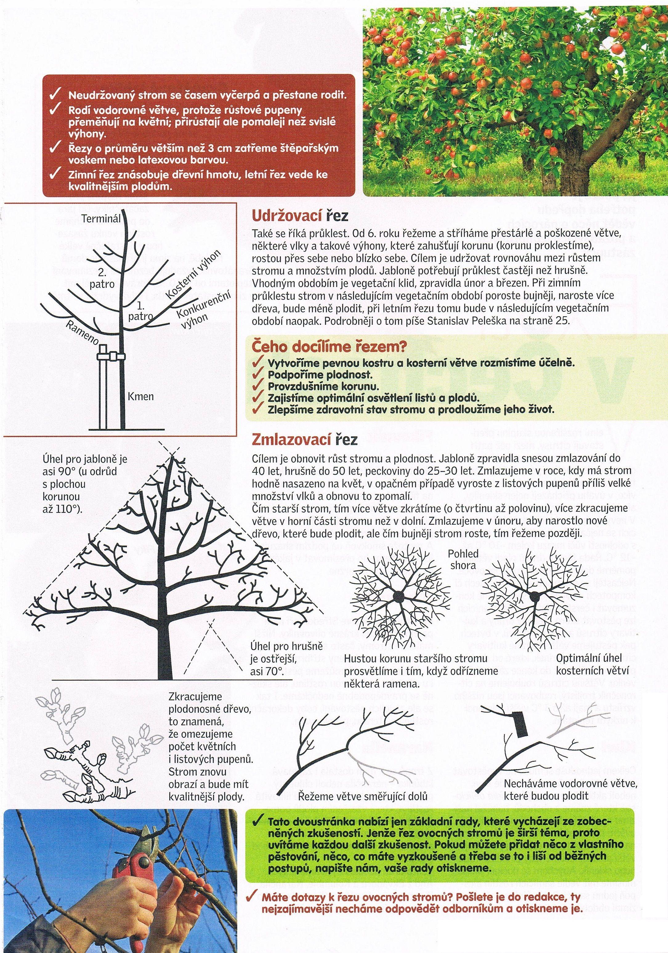 Prořezávání stromů 2 | garden, permaculture, forest garden
