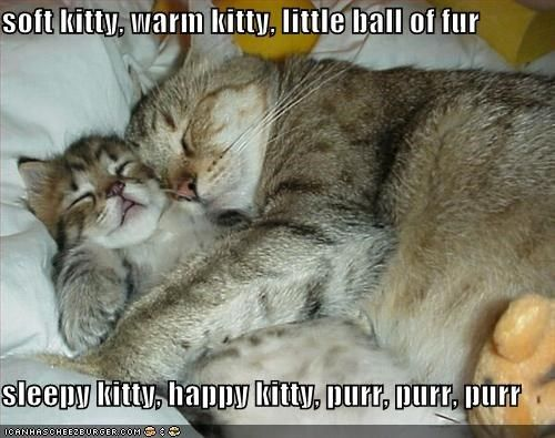 soft kitty, warm kitty, little ball of fur sleepy kitty, happy kitty, purr, purr, purr #sleepykitty