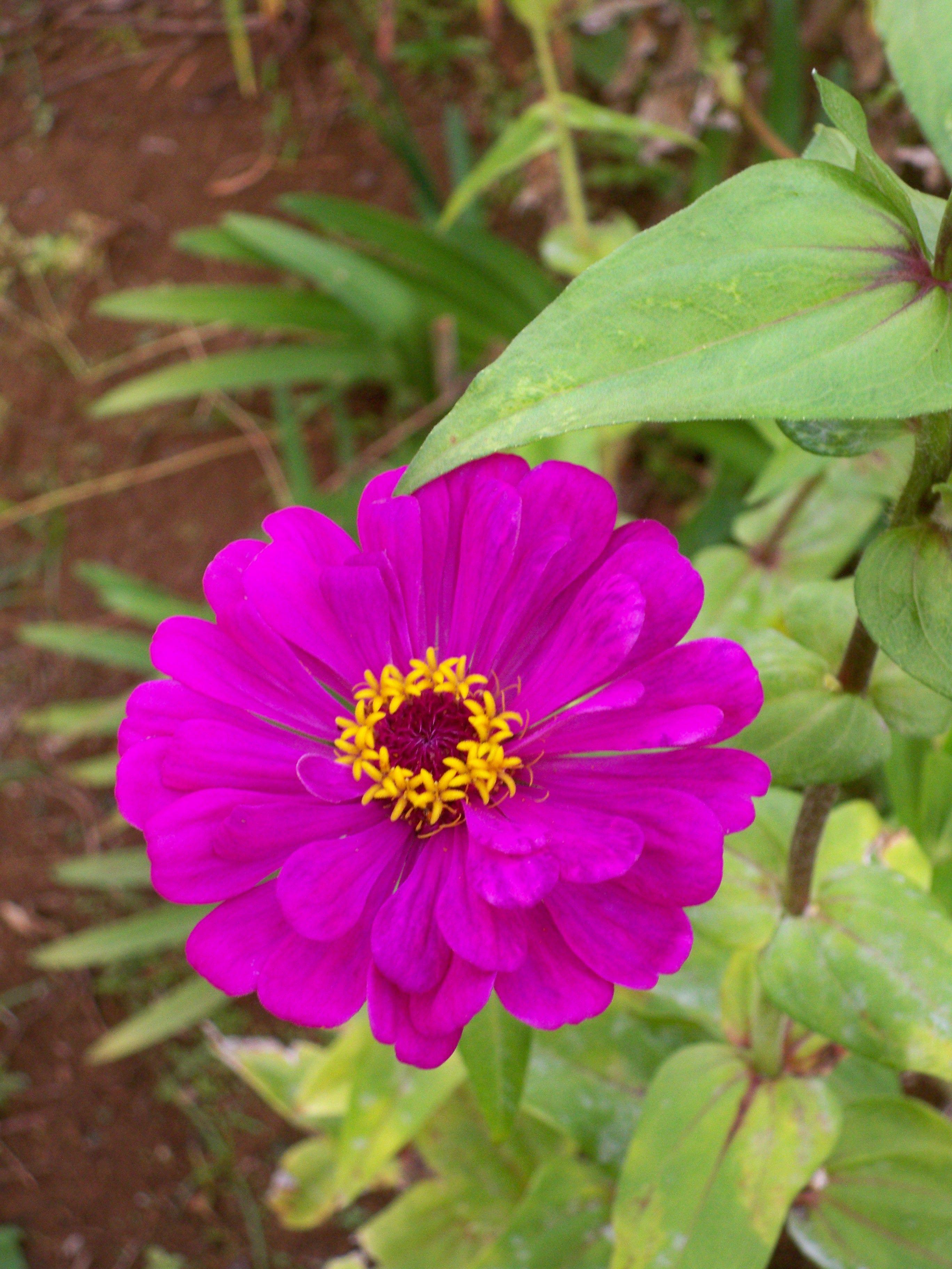 Flowers of Hawaii