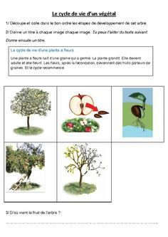 Cycle De Vie D'un Arbre : cycle, arbre, Cycle, Végétal, Pommier, Exercices, Sciences, –…, Science,, Education, Life,