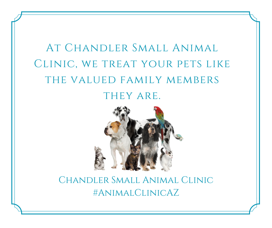 Pin By Chandler Small Animal Clinic On Chandler Small Animal