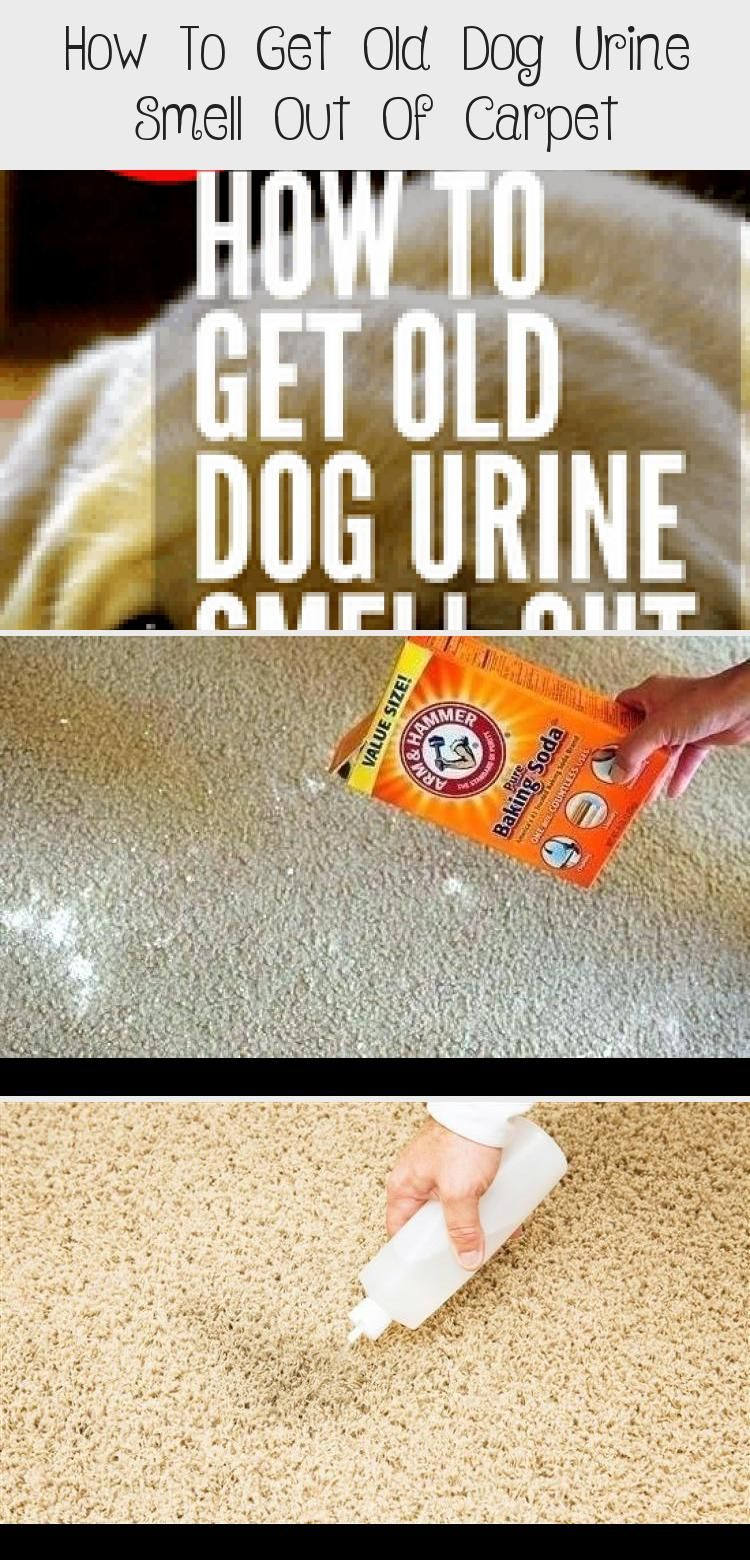 How to get old dog urine smell out of in 2020 dog urine