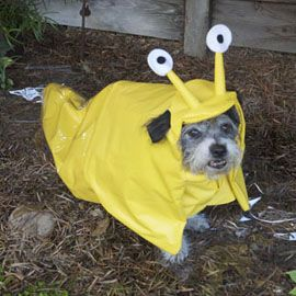hello this is dog banana. dog · banana slug hello this is