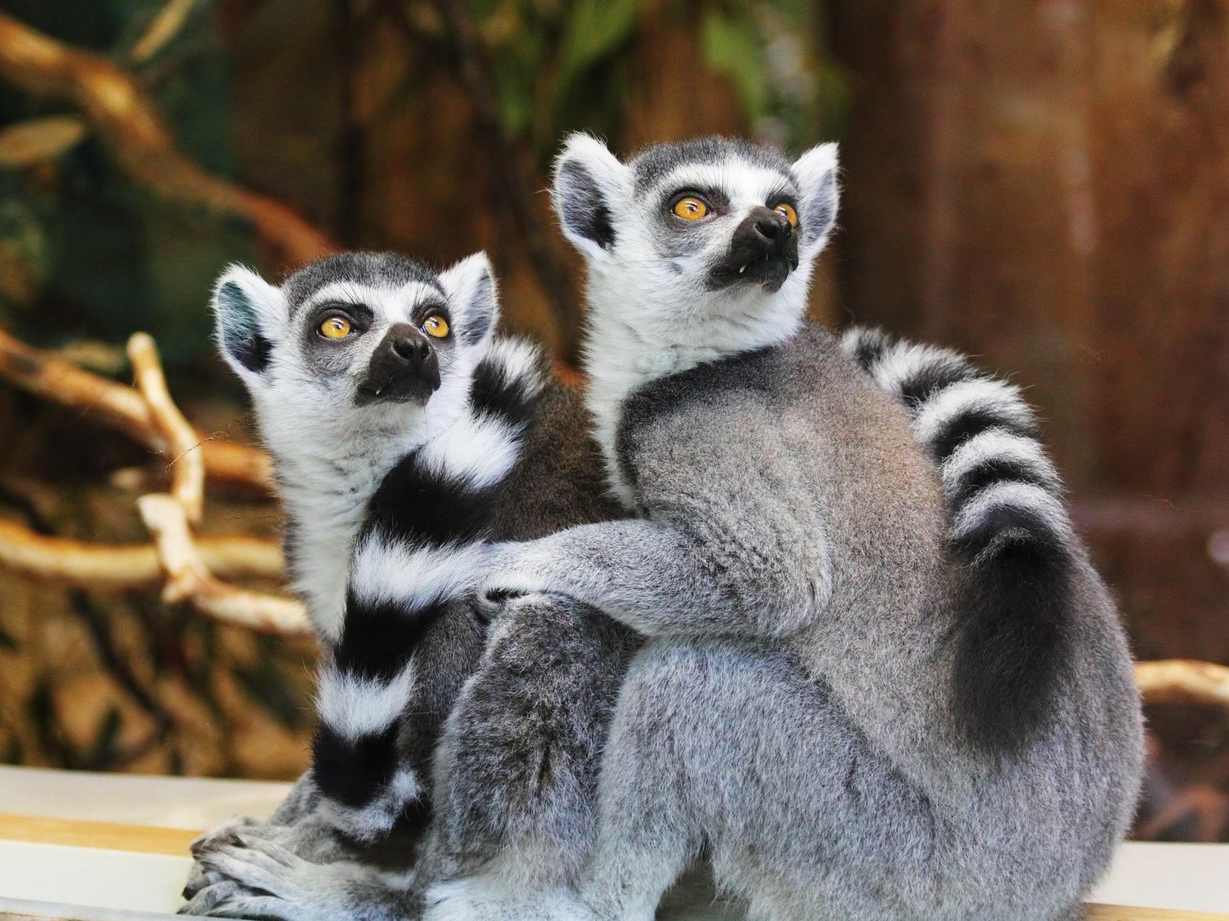 Tierwelt Zoologie Tiere Tiere Mit A Z Am Ende Tier Mit W Am Ende Tiere Zoologie Ausgestopftes Tier