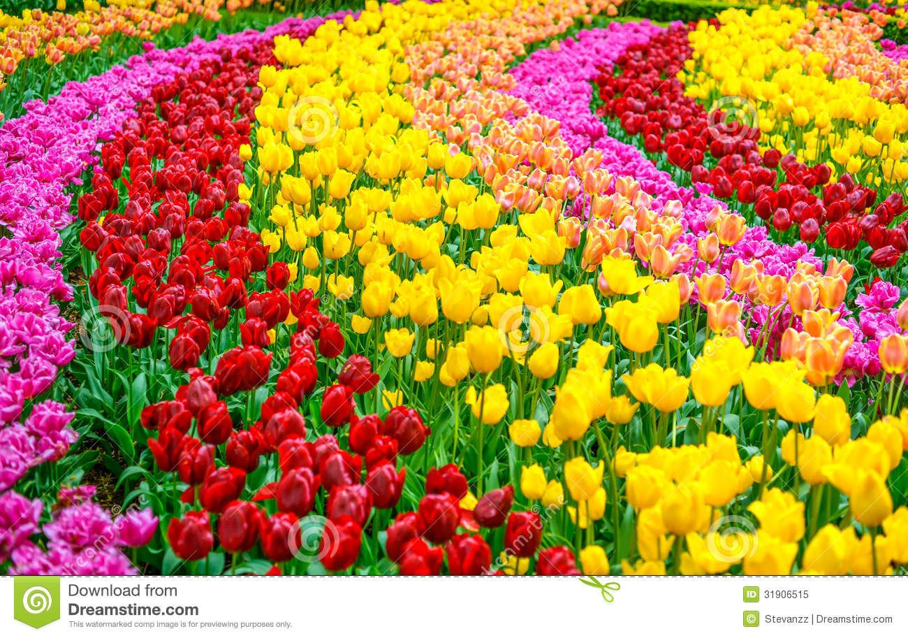 beautiful flowers garden