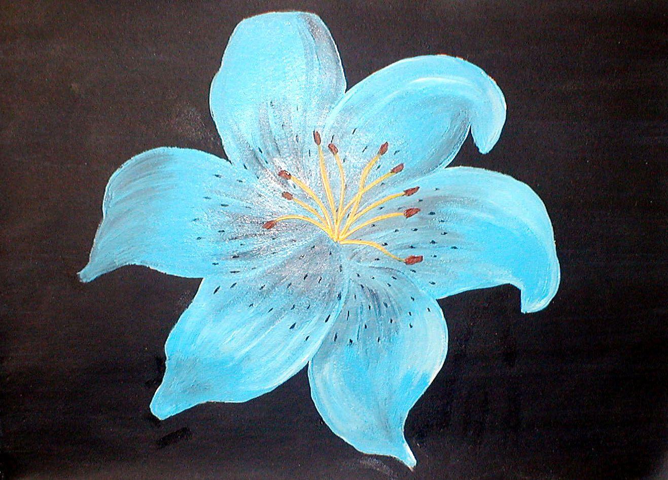 Blue tiger lily flower blue tiger lily new year 2014 pinterest blue tiger lily flower blue tiger lily izmirmasajfo