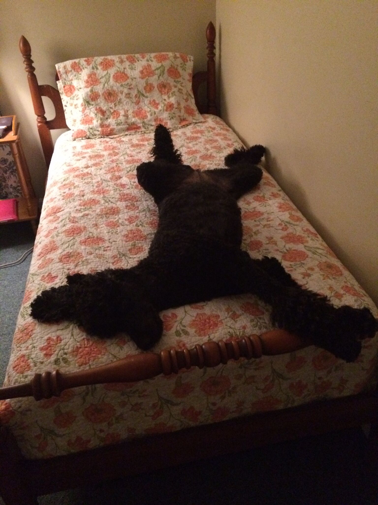 Say hi to Abby... I think she has her own bed? Poodle