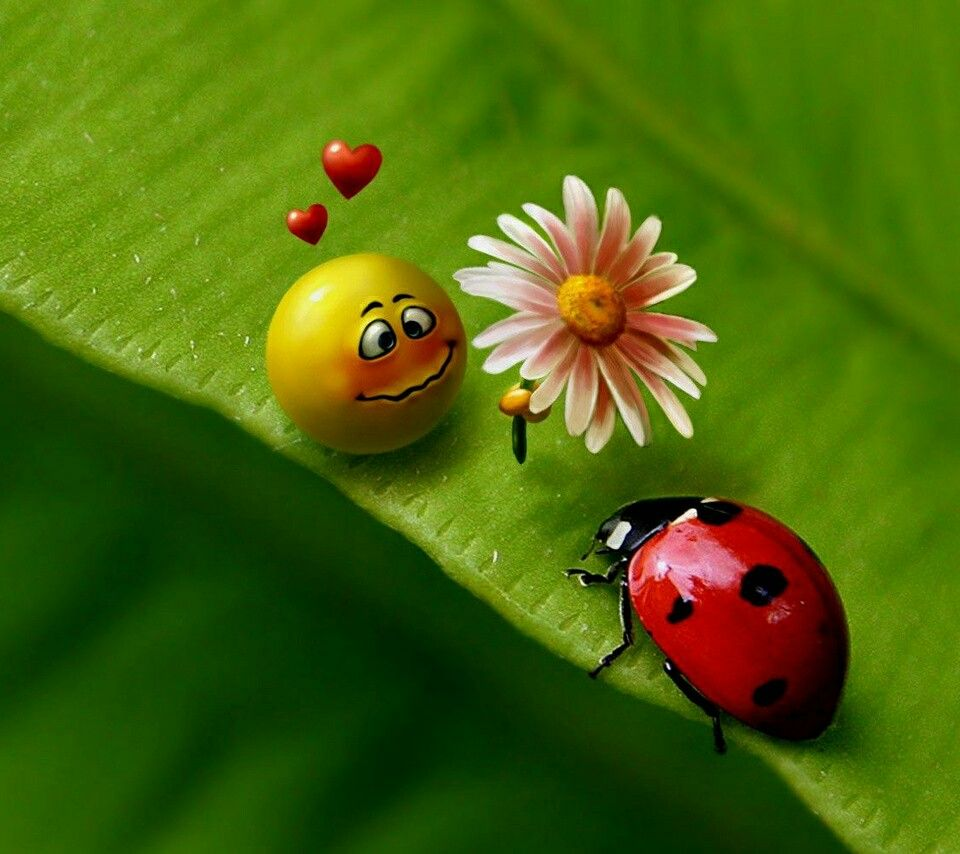 Pin by lidia on biedroneczki ladybugs pinterest ladybug