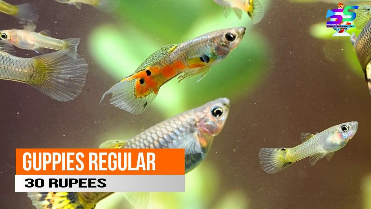 Aquarium Fish Prices In India With Name S 2018 Aquarium Fish Fish Aquarium