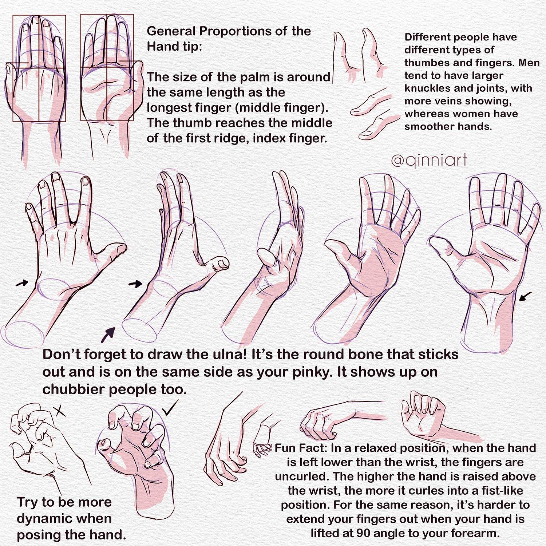 Beautiful Anatomy Of Your Hand Component - Anatomy Ideas - yunoki.info