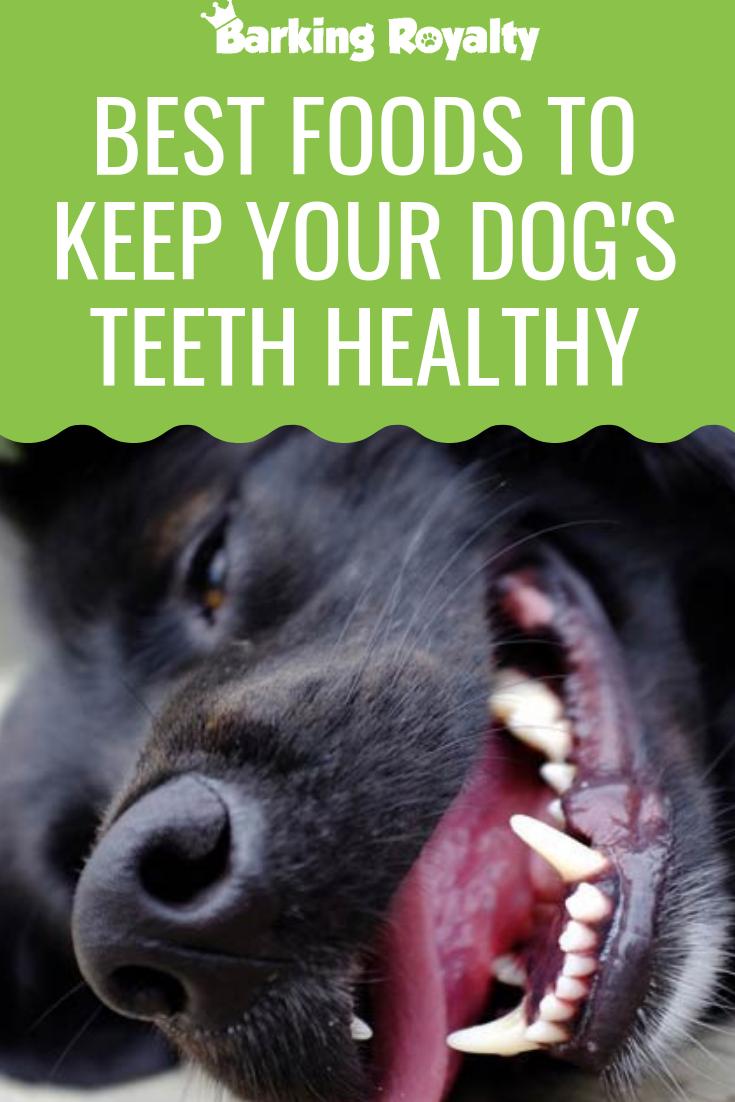 Best Foods To Keep Your Dog's Teeth Healthy - Barking ...