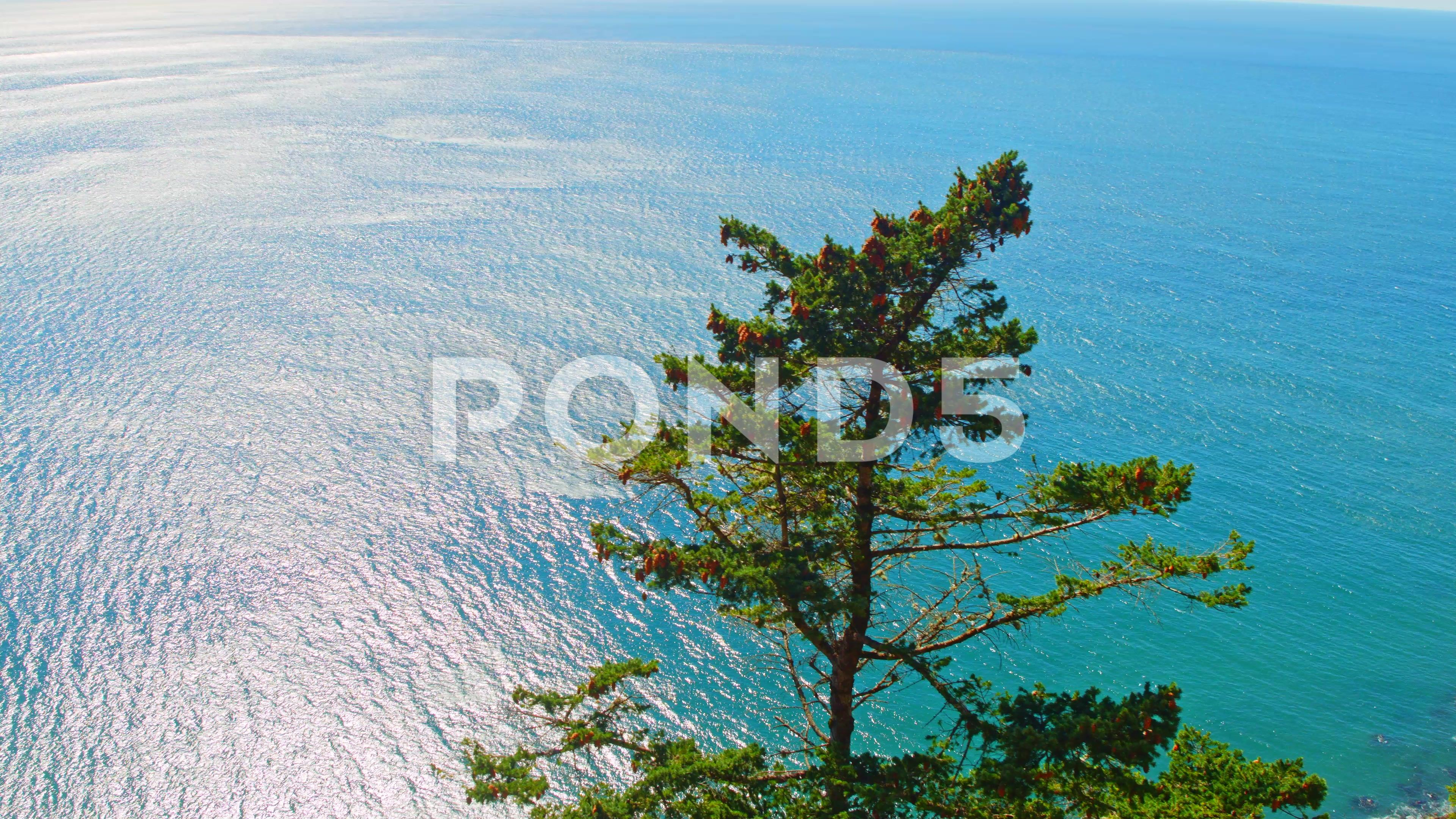 Turquoise Pacific Ocean Rocky Shoreline On A Bright Sunny Day Stock Footage Ad Rocky Shoreline Ocean Turquoise Pacific Ocean Ocean Rocky Shore