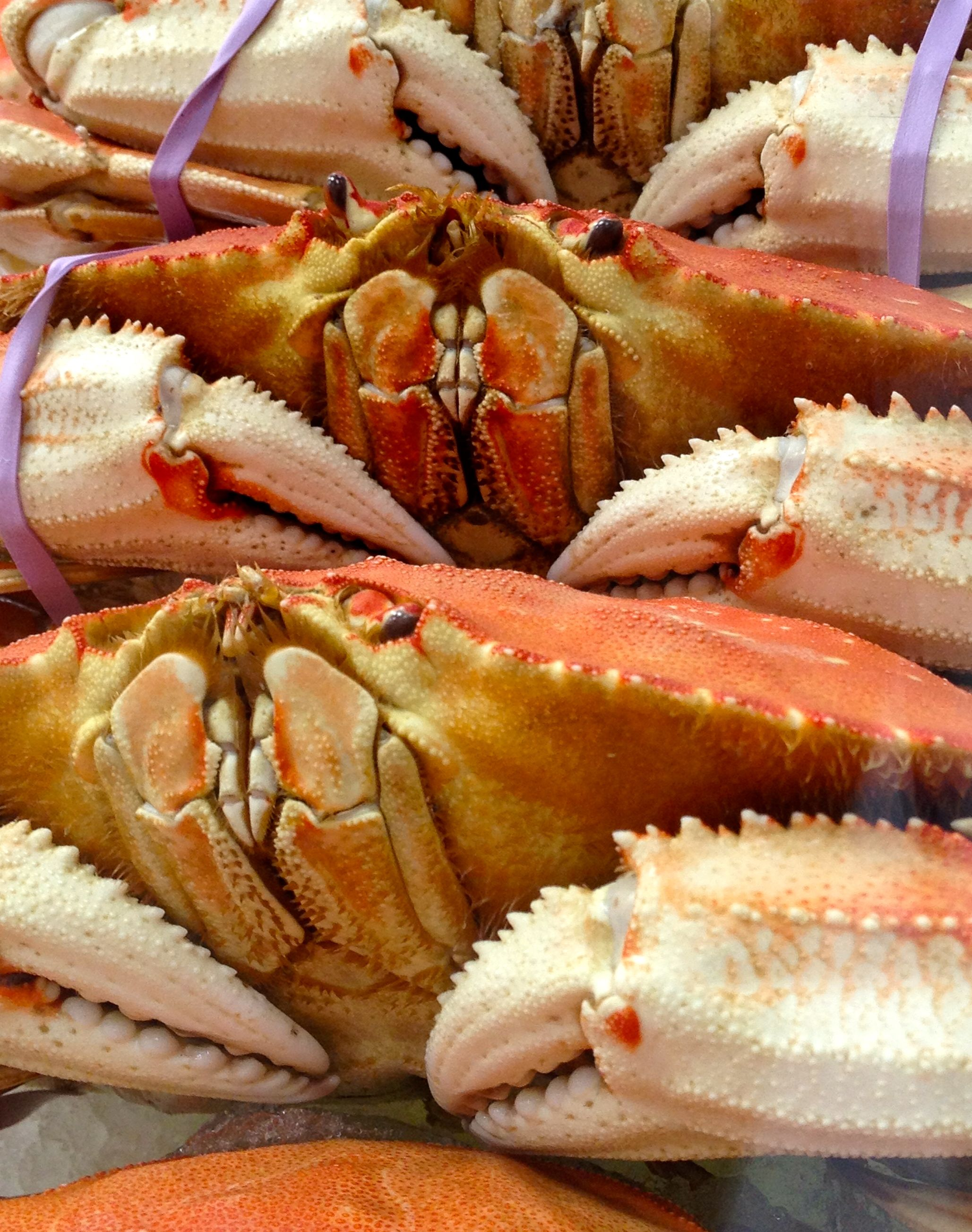 Dungeness Crab at the Costco Seafood RoadShow  | All things