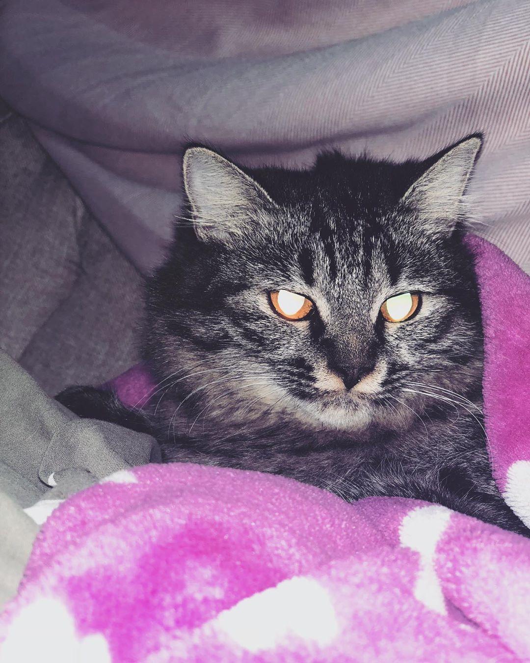 عيونها تخوف هنا كأنها معصبه Animals Cats