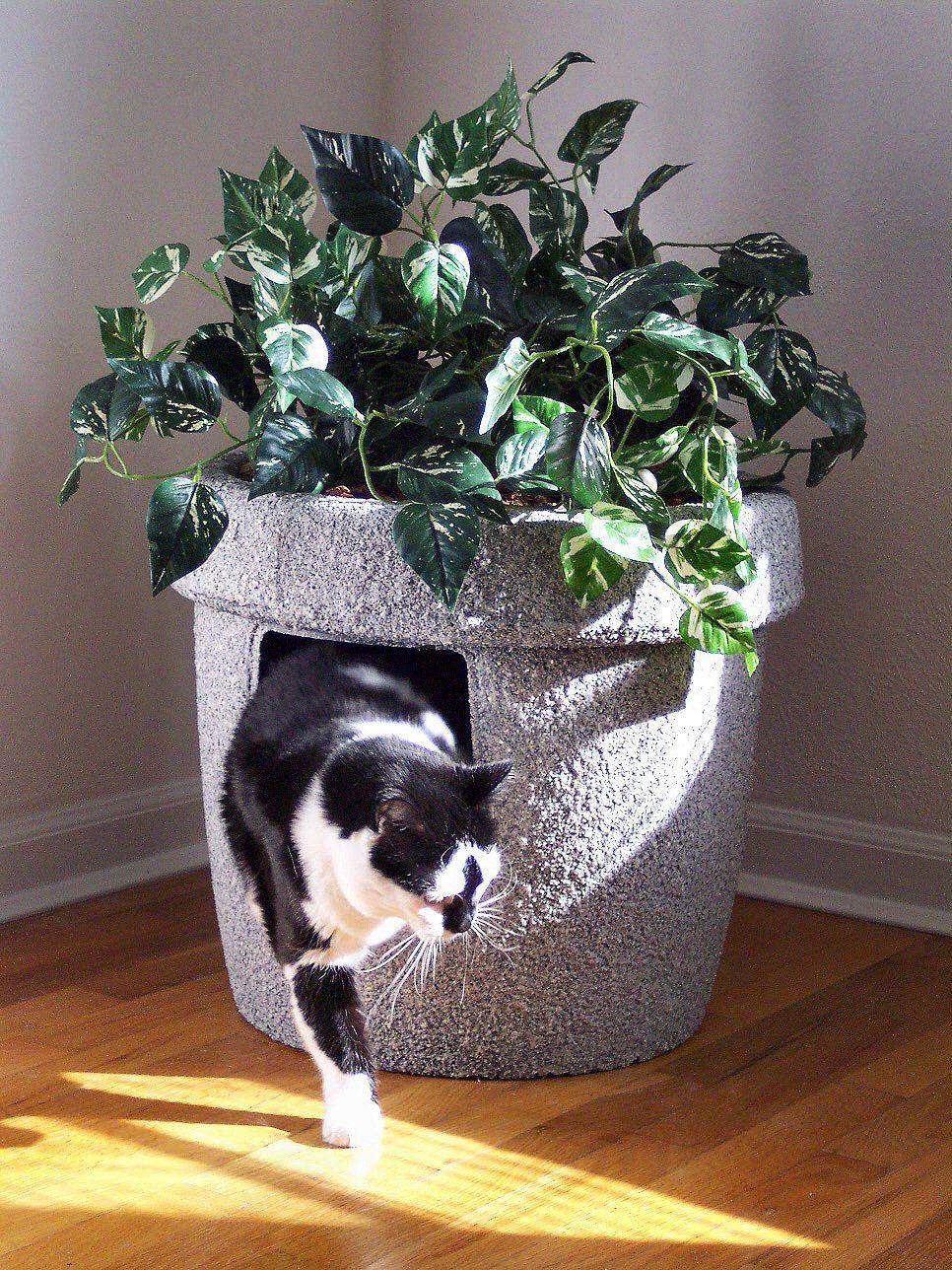 Champagne grey stonecoat decor ivy cat hidden litter box