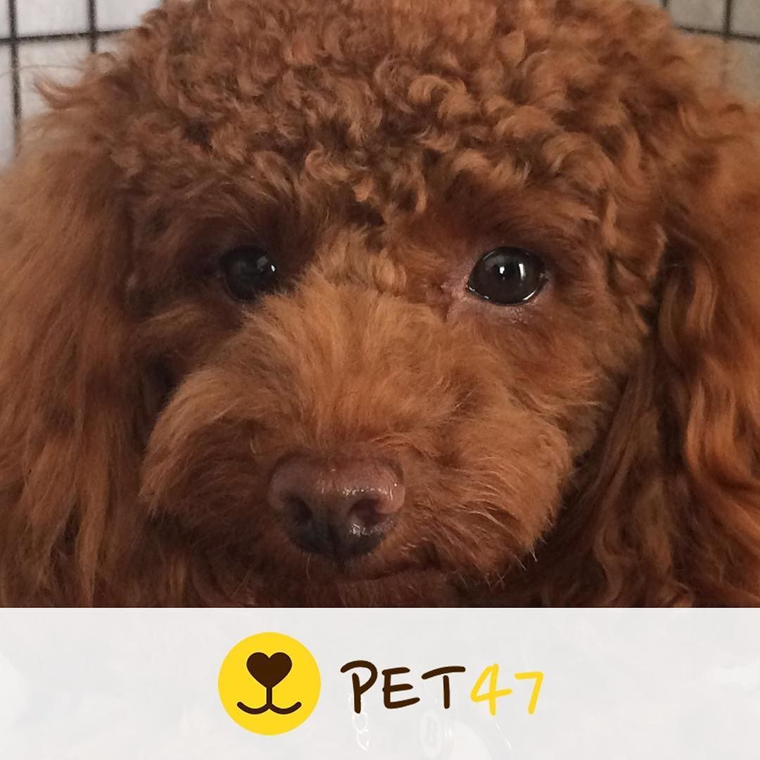 ペット ベル Ber Loveber62 飼い主 Angela313 ペット募集中です プロフィールのリンクからアプリをダウンロードできます Pet47 犬スタグラム いぬすたぐらむ いぬ好き 犬飼いたい 犬好きな人と繋がりたい 犬好き 犬欲しい 犬ラブ 犬らぶ Dogs Animals
