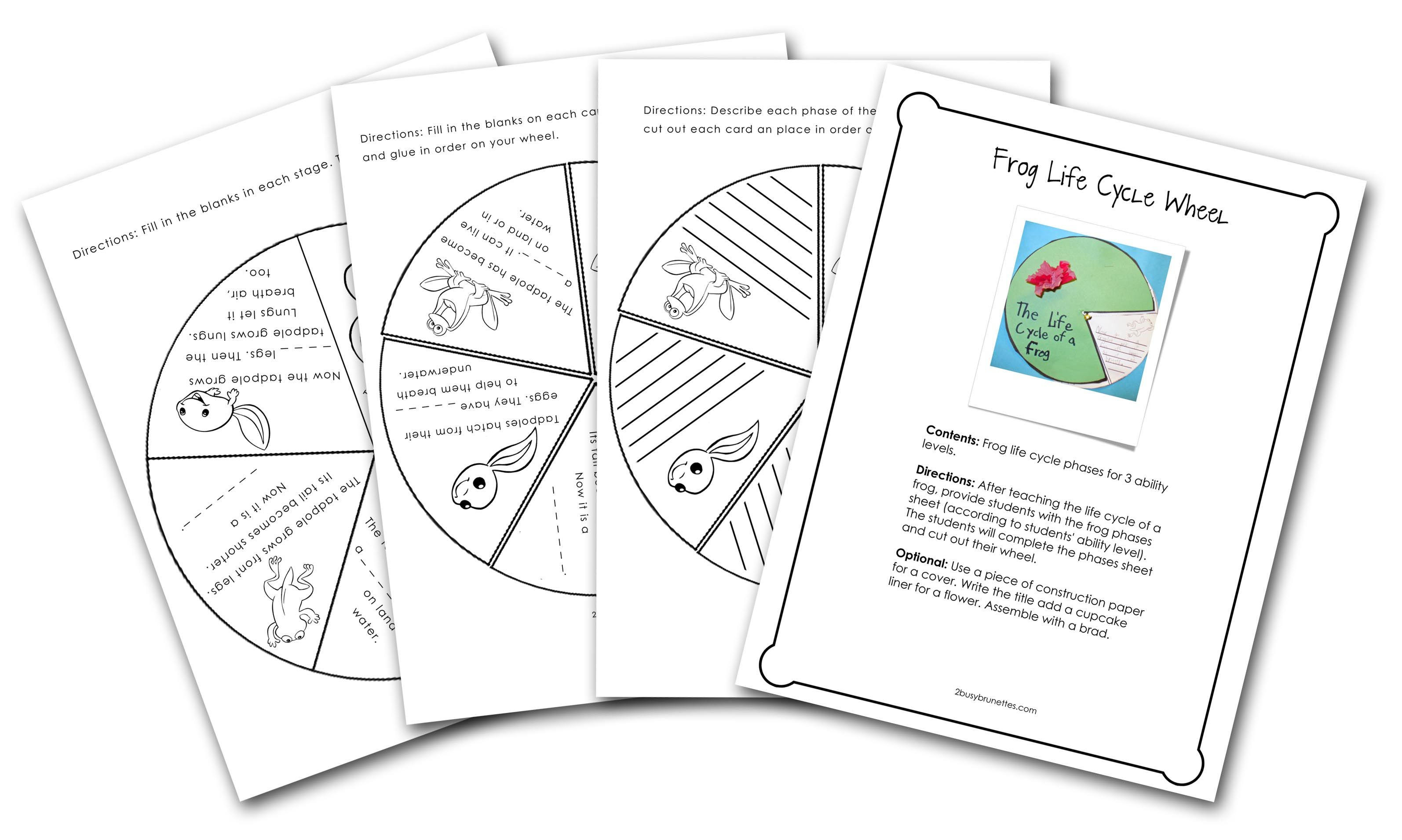 Frog Life Cycle Wheel: Students will use the wheel to show