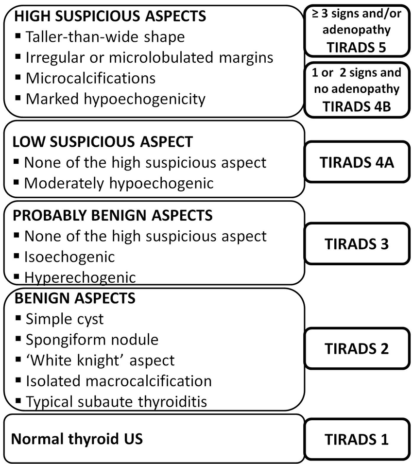 Figure 1 Tirads Classification Algorithm 13 Thyroid
