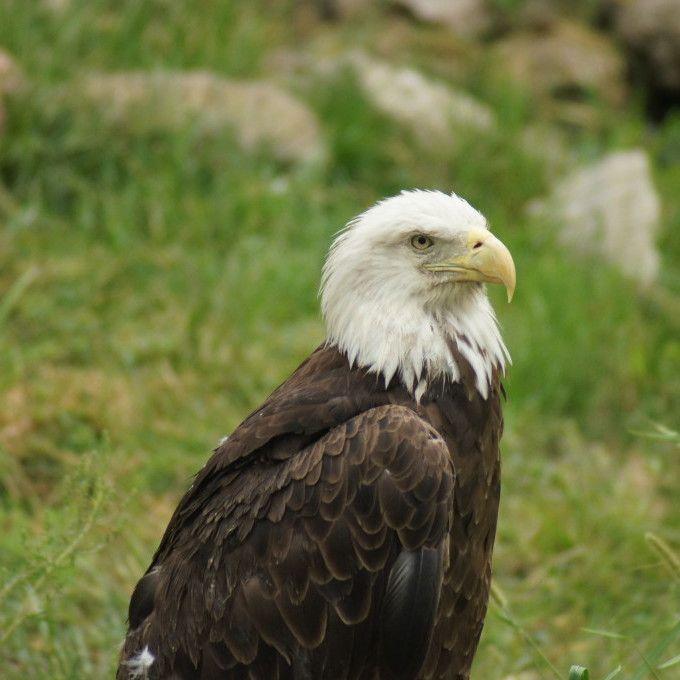 The National Bird Visits Willowsford