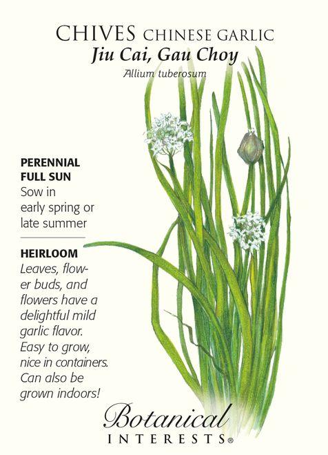 Chinese Garlic Chives Seeds 1 Gram Perennial Herb Chive Seeds Perennial Herbs Herbs