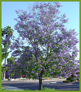 Out Top 5 Favorite Flowering Trees For Spring In Arizona Nevada And Southern California
