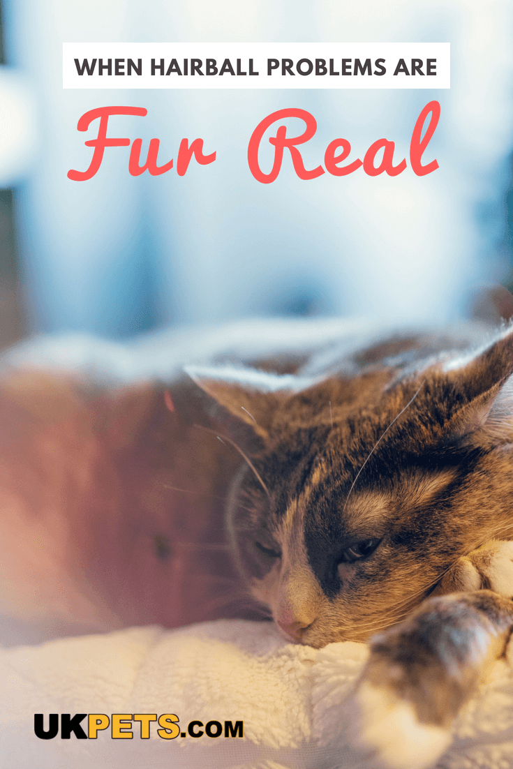 Are cat hairballs normal? How much is too much? Your cat's