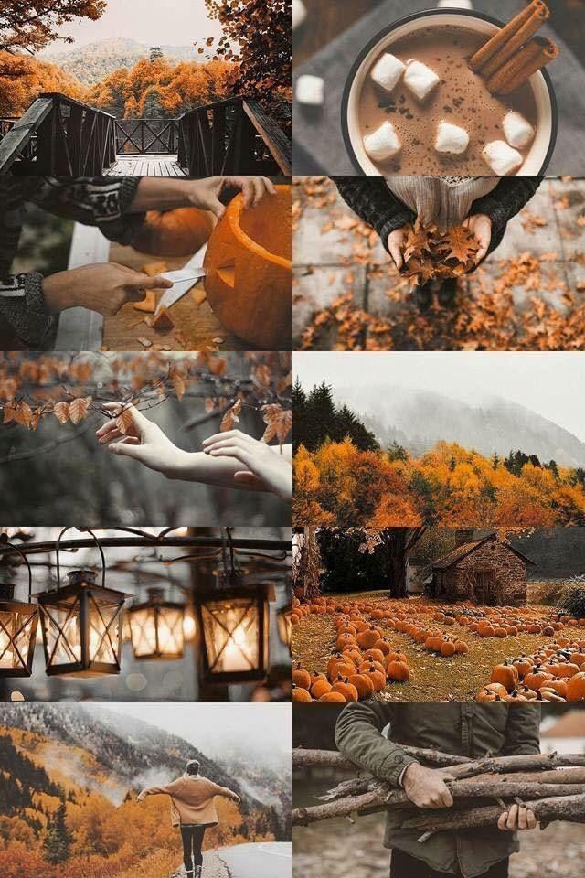 Mood Board l Branding Inspiration l Website Branding & Design | Autumn and Halloween #autumnwallpaper