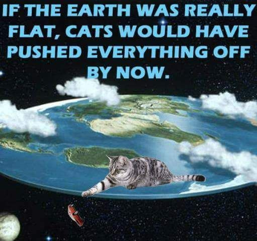 Cats On A Flat Earth Funny Pictures Cat Memes Cats