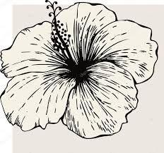 """Résultat de recherche d'images pour """"hibiscus geant vin extraordinaire"""""""