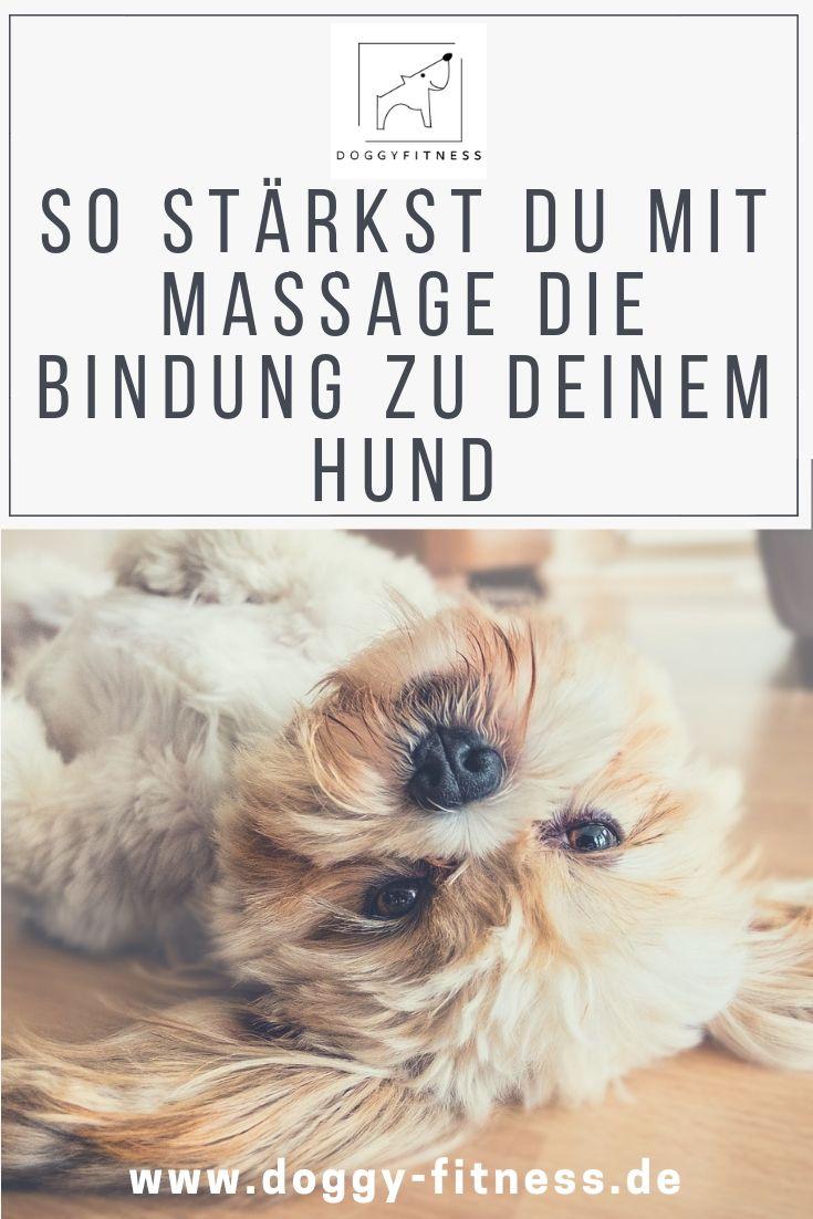 Massage Beim Hund Mehr Als Nur Wellness Hunde Hundegesundheit Und Hunde Ernahrung