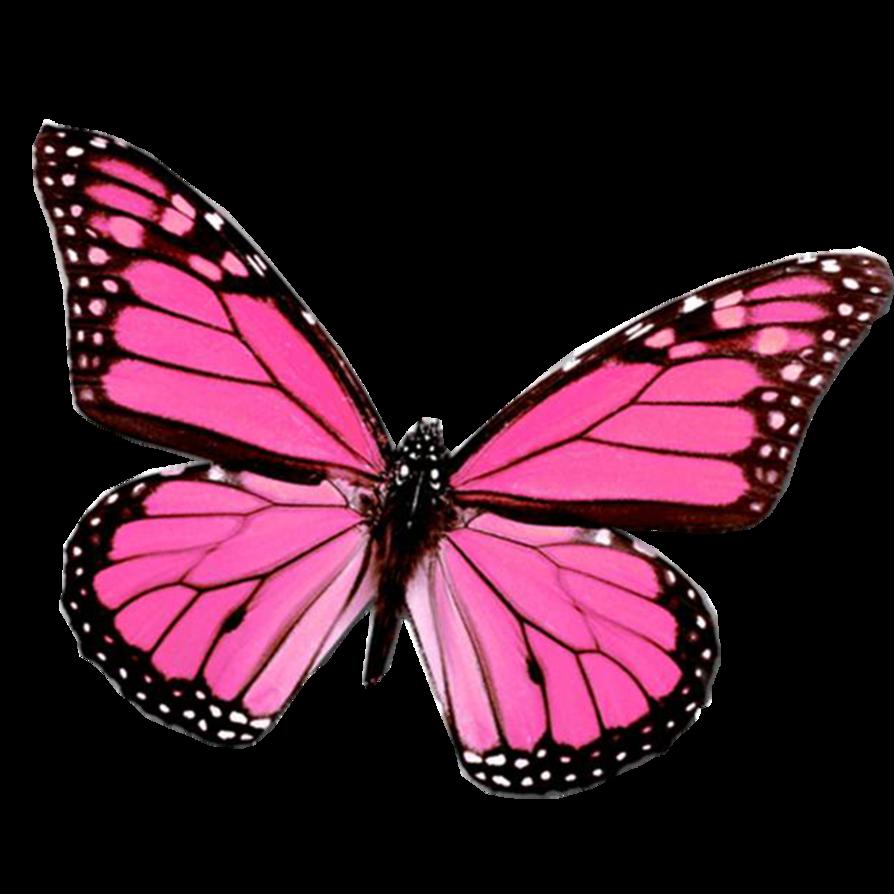 mariposa_png_by_juli_gonzalez-d4sjel6.png (894×894) | Clipart ...