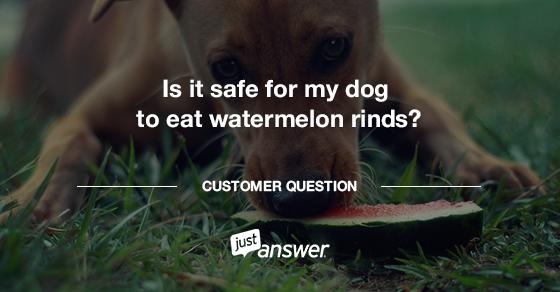 My Dog Ate Watermelon Rinds Watermelon rind, Watermelon