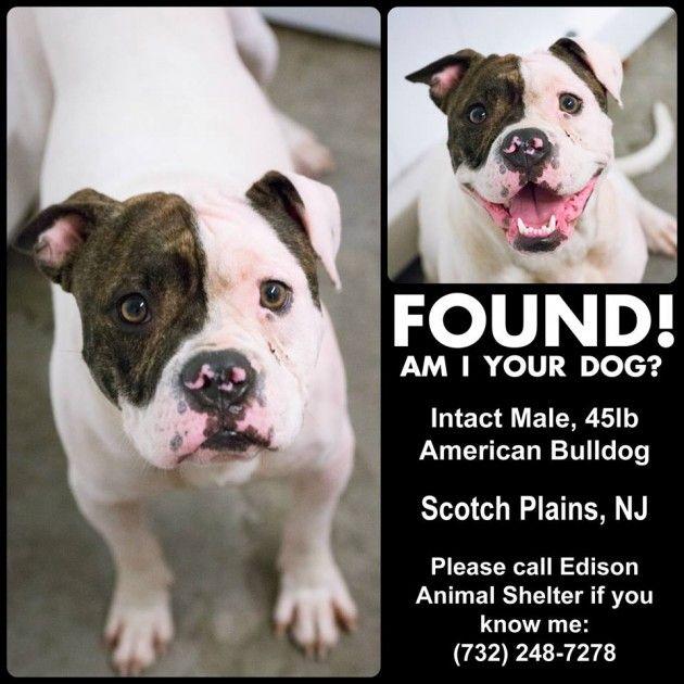 Found Dog (Sammy's Hope)